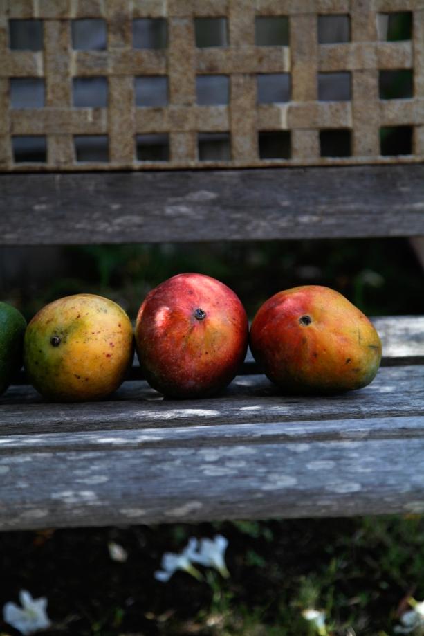 Mangobench