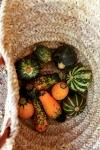zucchini-basket-1